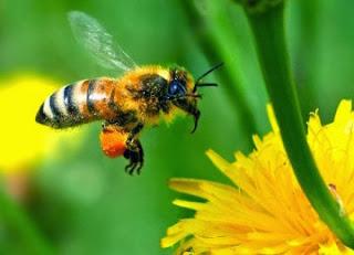 Peneliti: Ada Kemiripan Otak Lebah Dengan Otak Manusia