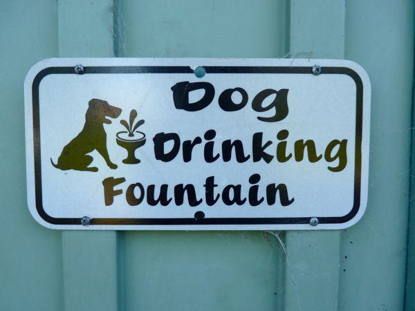 Walking San Francisco Bay: Dog Friendly Trails