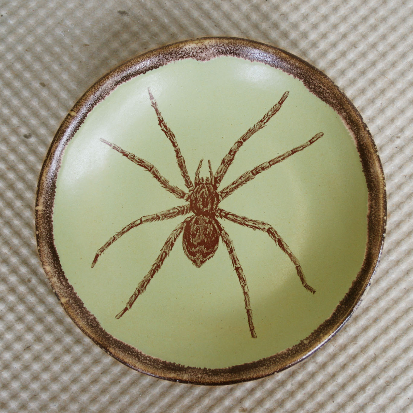 Spider Dishes