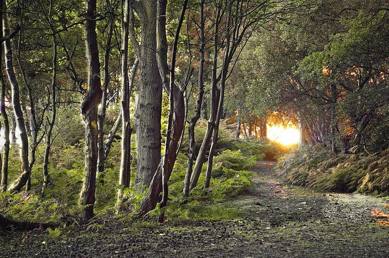 Smell of books il sentiero dei nidi di ragno italo for Il sentiero dei nidi di ragno