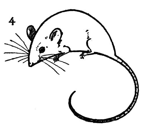 По картинкам как рисовать мышку