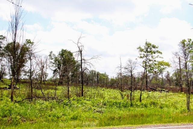 St Croix State Park storm damage
