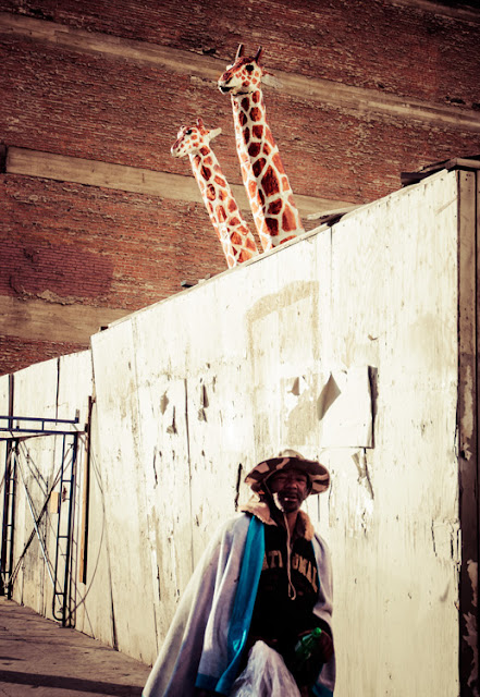 Giraffe with sombrero