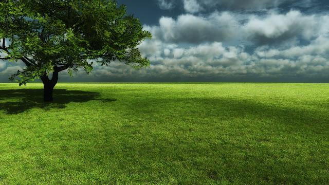 Hình nền đồng cỏ xanh mát