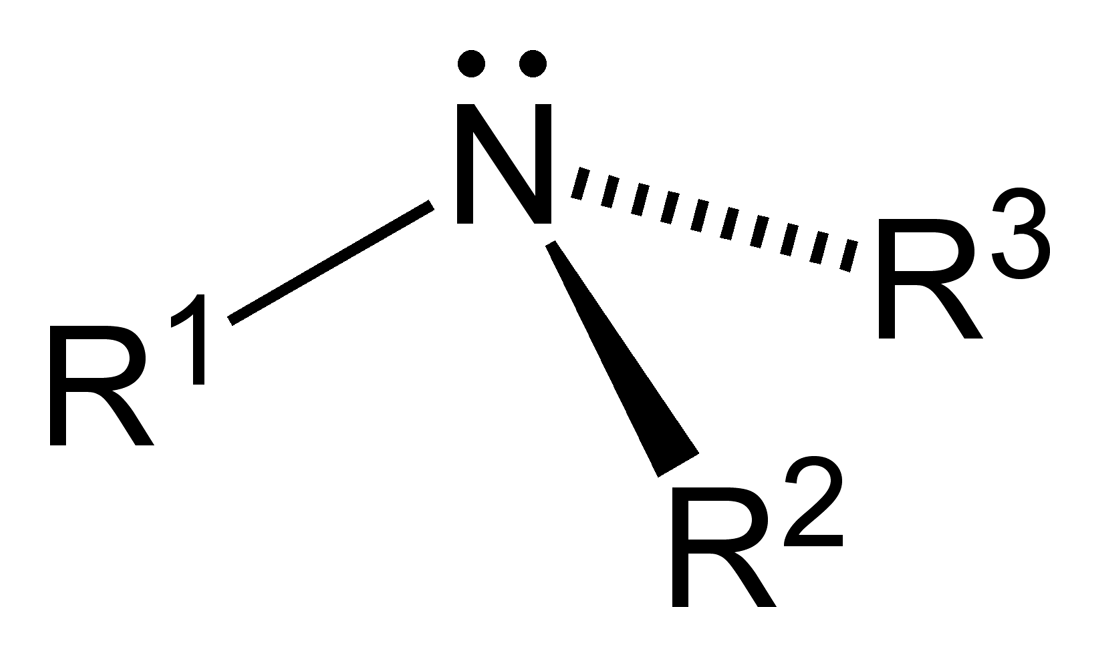 functional groups  amine