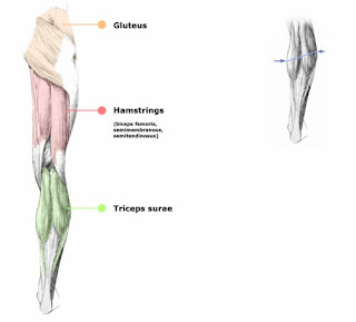 leg back muscles Lesions, Levels, Sensory and Mobility