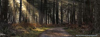 Photo couverture facebook arbres