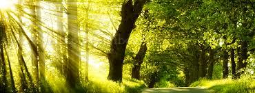 എന്റെ ബ്ലോഗ് - അ രു ണ കി ര ണ ങ്ങ ള്