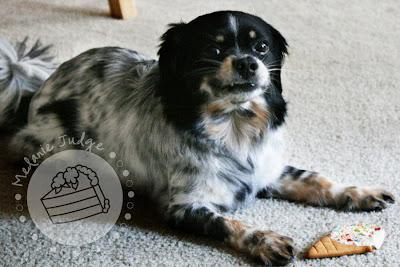 dog birthday cookie