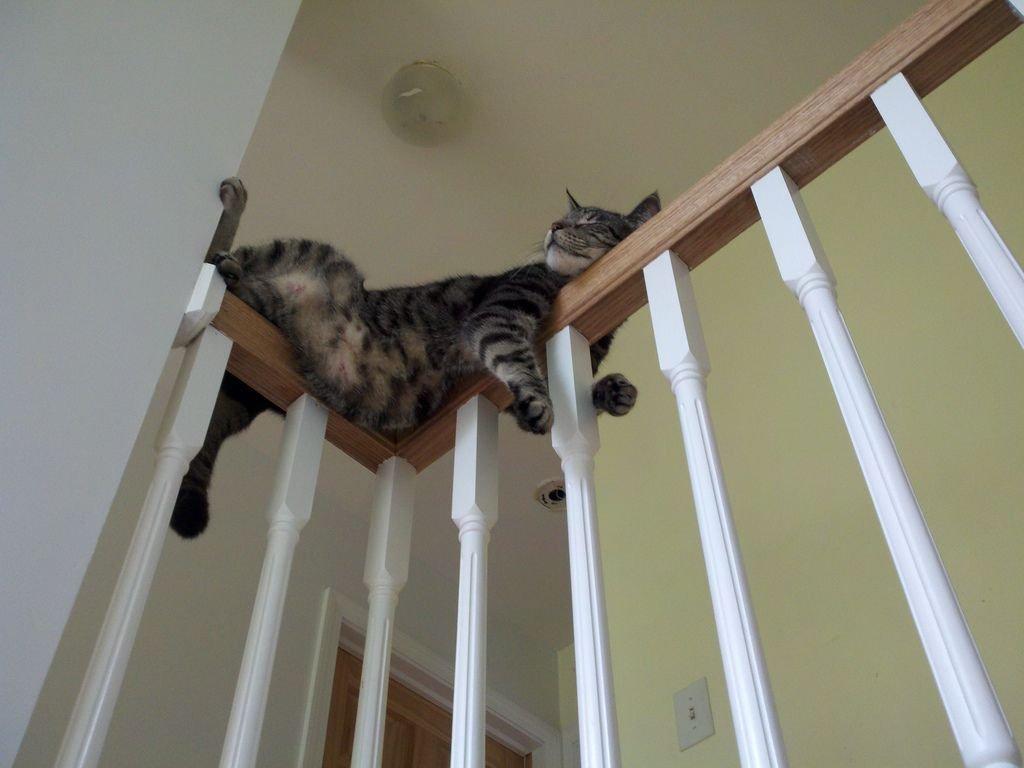 Лестница - лучшее место для отдыха кота в доме