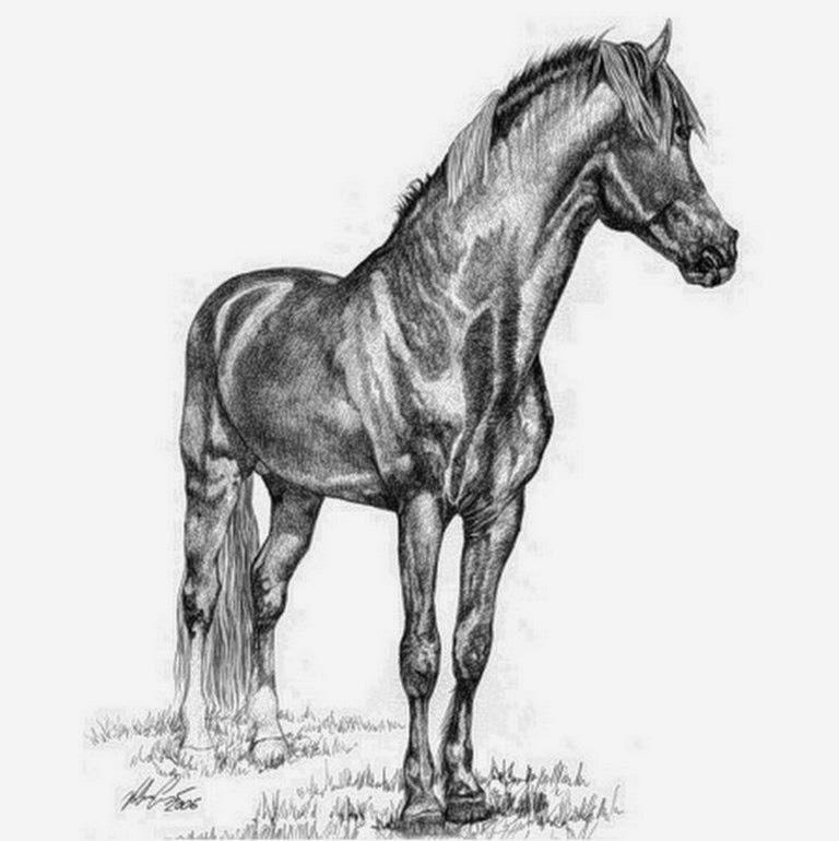 dibujos-artisticos-a-la-lapiz-de-caballos