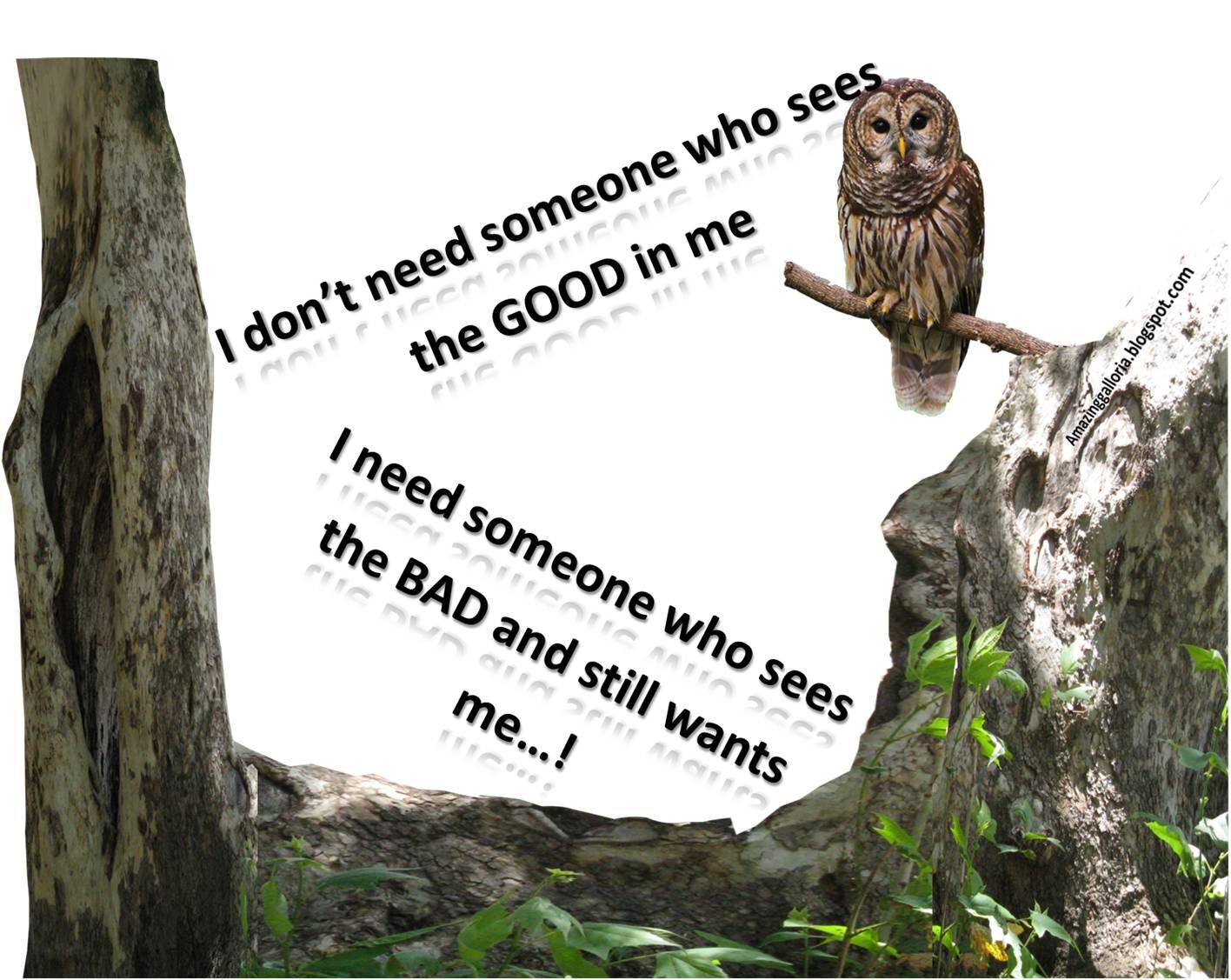 http://2.bp.blogspot.com/-eMs9_mUwga8/T3Cub0hcBII/AAAAAAAAAh0/a3pxXX2cPgY/s1600/birds+messages+15.jpg