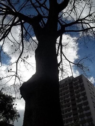 Árvore, amor, vida, folhas, meio ambiente