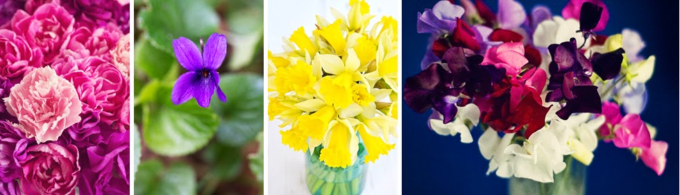 Birth Flowers - January - April © Louise Jolley