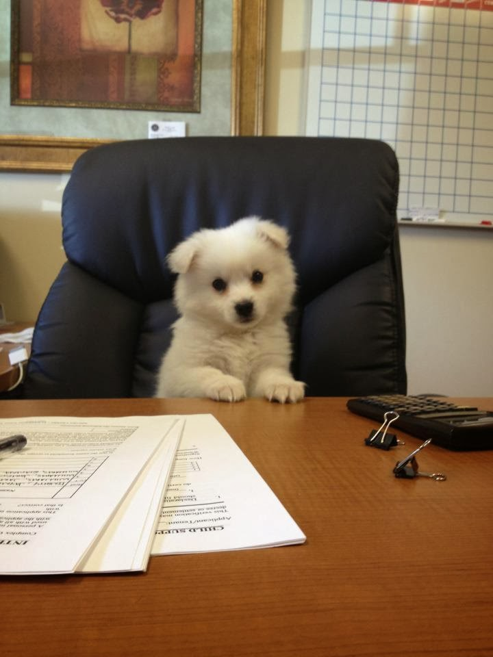 Cute dogs - part 11 (50 pics), dog sits on office chair