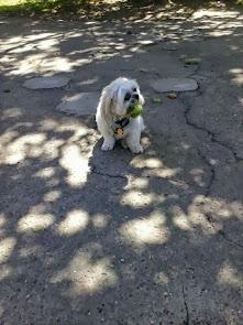 Max enjoys his dog parks