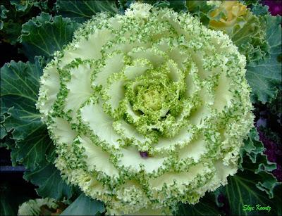 green rose flower