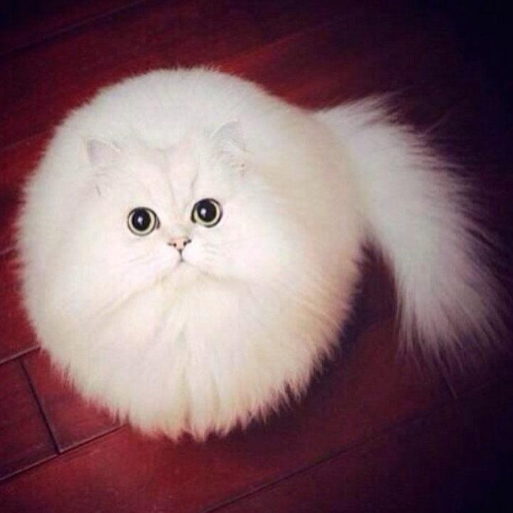 Hilarantemente PsBattle reimagina un gato llamado Ronda en situaciones fantásticas
