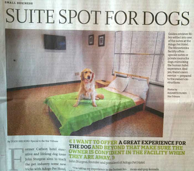 Star Tribune clipping of a dog sitting in the middle of a bed in his doggie hotel room