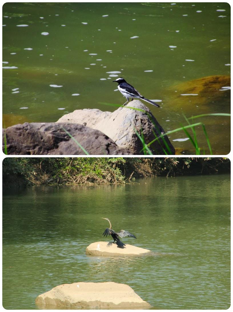 Birds of cheekati gundam