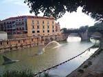 Una Sardina en el rio..Segura