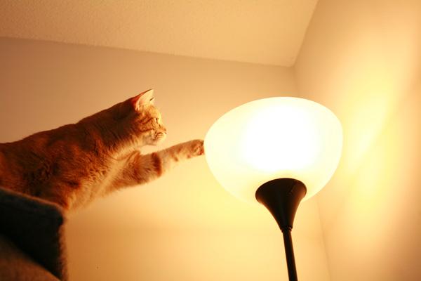 Кот выяснил, что на картинке была изображена лампа