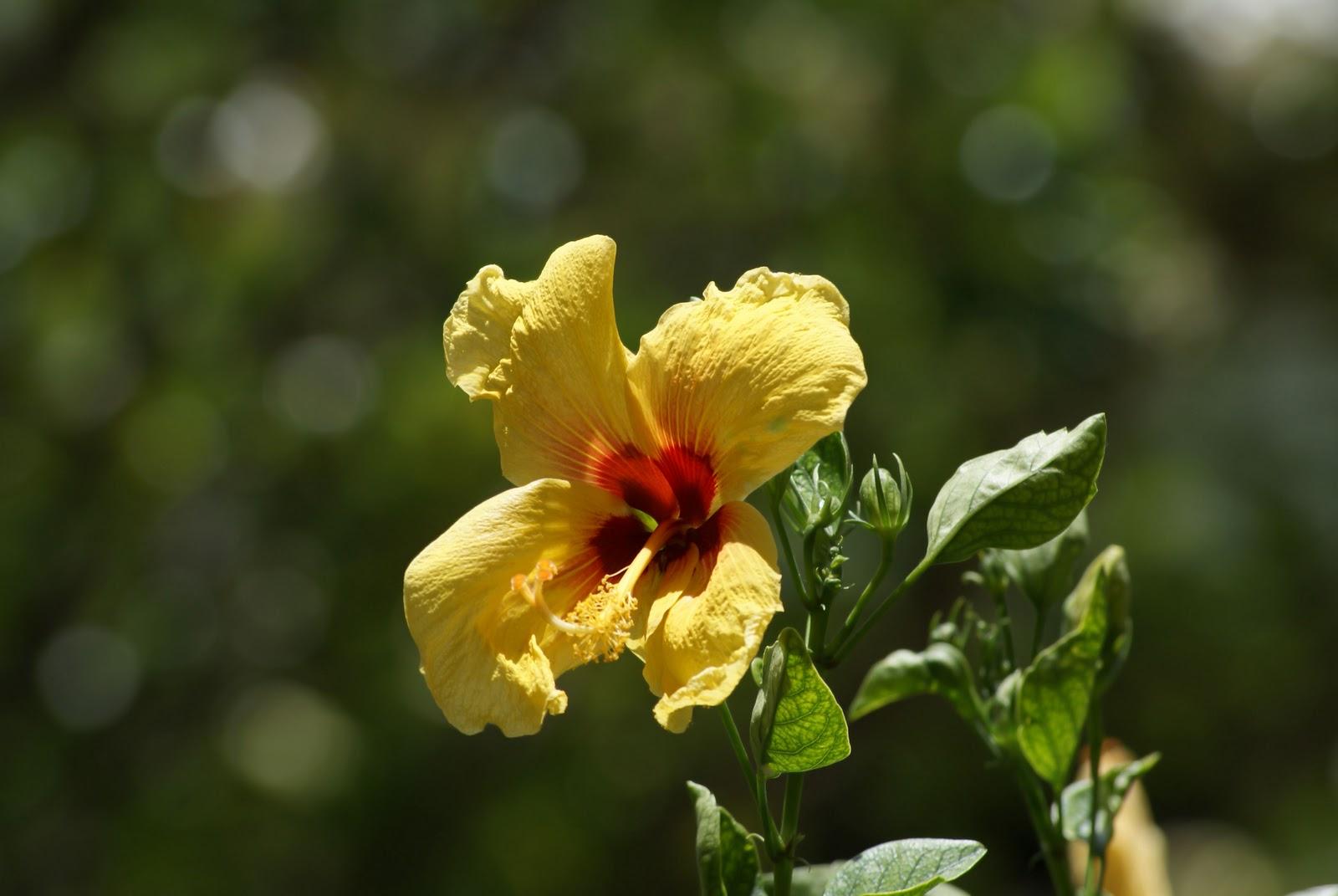 Exotic plants and flowers in Maui | La vita è bella