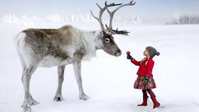 ¿Por qué la nariz de los renos es roja?
