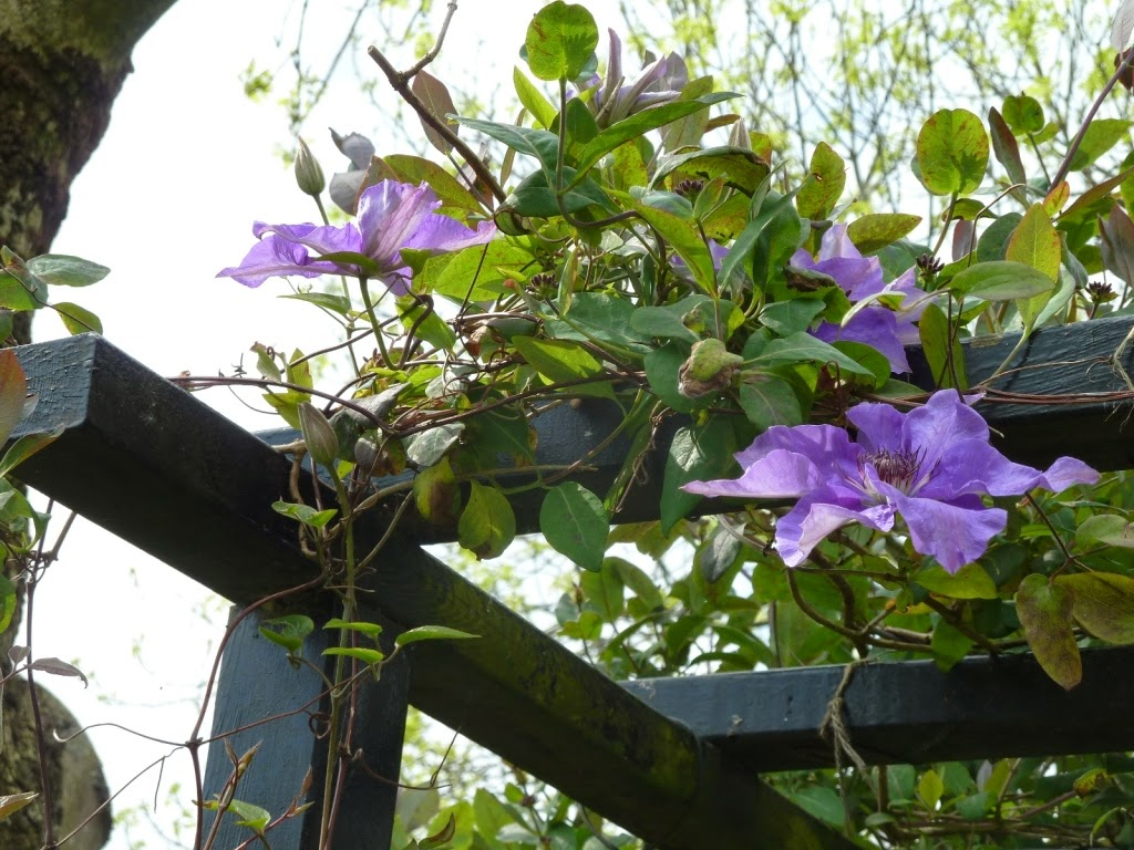 In mÍjn tuin ... : 06/06/14