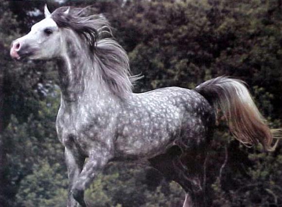 Light Brown Horses The Horse Lover's Guid...