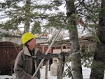 How to Prune Landscape Trees
