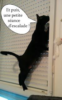 Chatte noire qui escalade des volets.