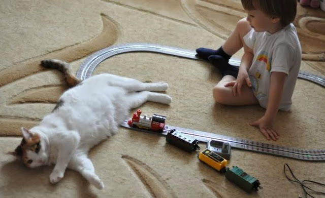 Funny cats - part 85 (40 pics + 10 gifs), cat annoying kid playing train