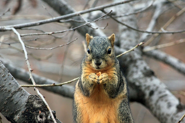 Cute Squirrel Eating Nuts