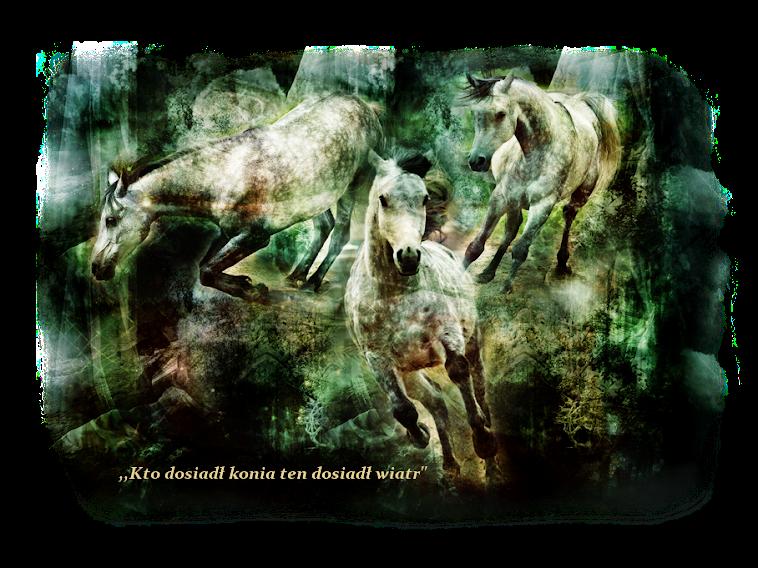 """""""Kto dosiadł konia ten dosiadł wiatr"""""""
