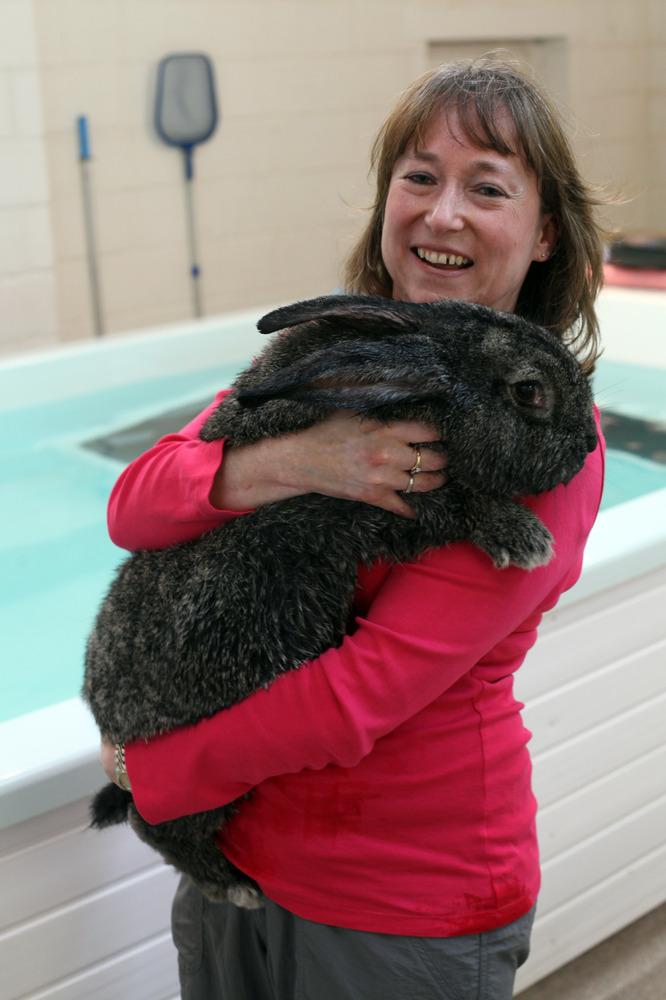Amanda Williams bersama arnab gergasinya.