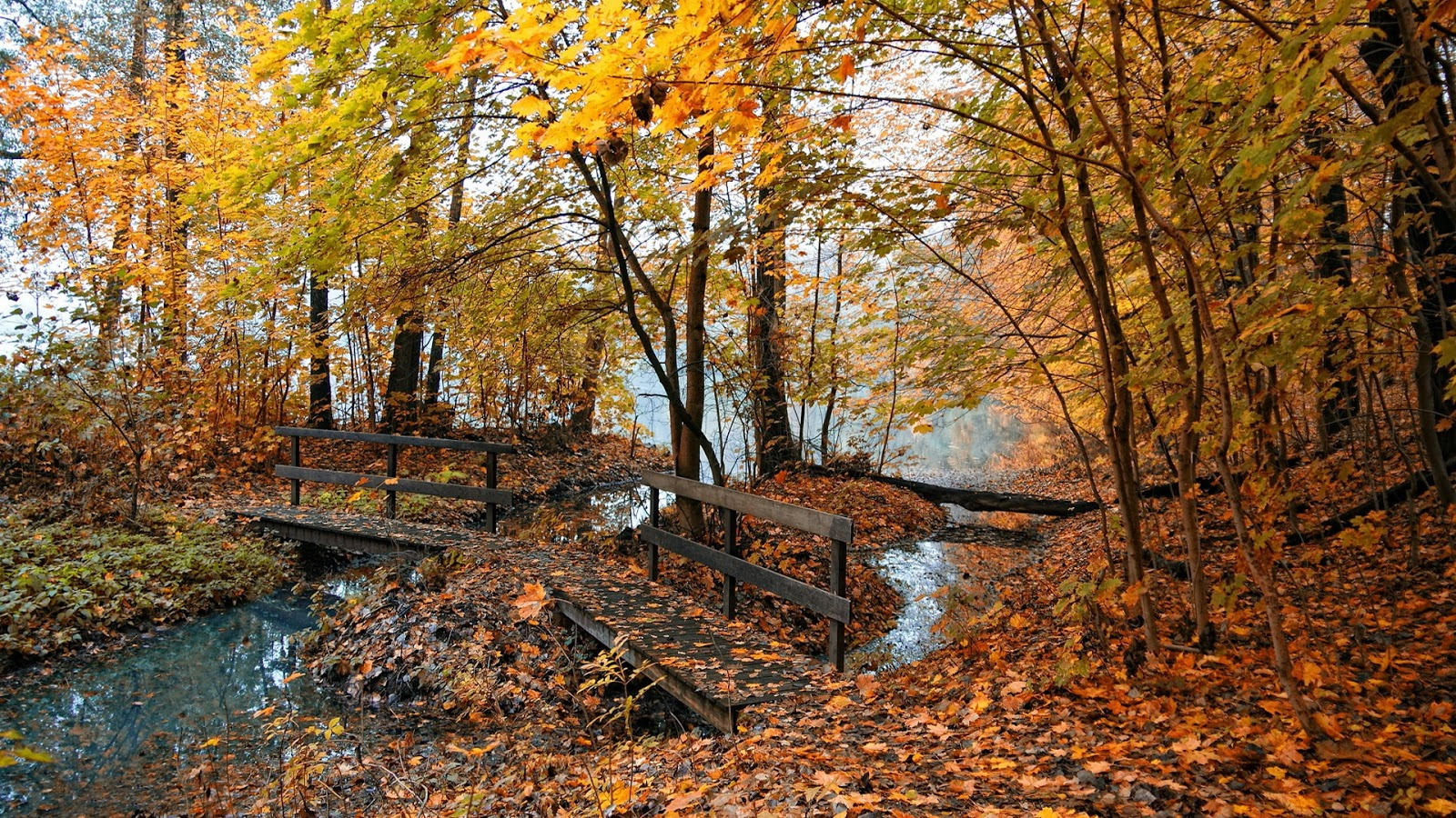 Autumn Little Wooden Bridge