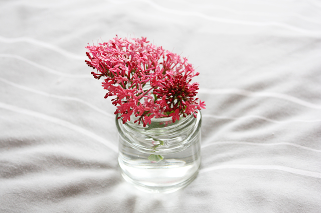 pink buddleja in small jam jar