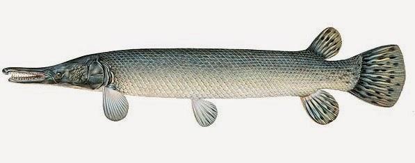umpan mancing ikan nila,umpan mancing ikan bawal harian,umpan mancing ikan sembilang,umpan mancing ikan lele kolam,umpan mancing ikan patin,umpan mancing ikan tawes,umpan mancing ikan sepat,