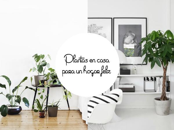 Las 5 Mejores Ideas Para Tener Plantas En Casa La