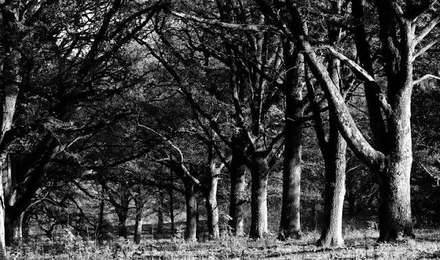 wood pasture