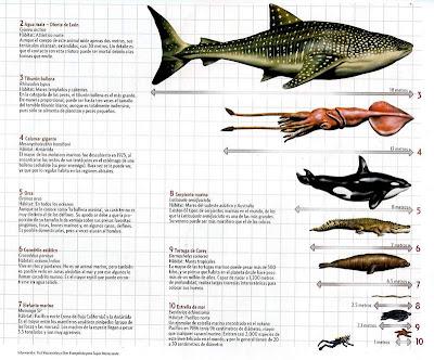 Cuales son los animales marinos mas grandes 2 de 2
