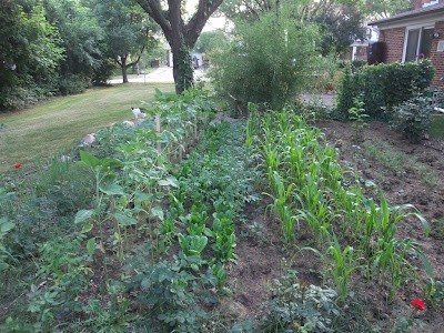 how to grow a backyard garden, michigan, vegetables