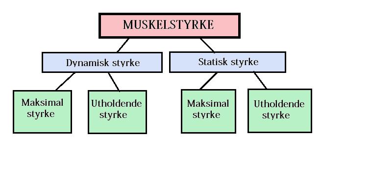 statisk og dynamisk muskelstyrke