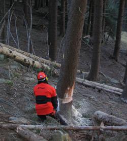 come tagliare la legna nel bosco, guida pratica