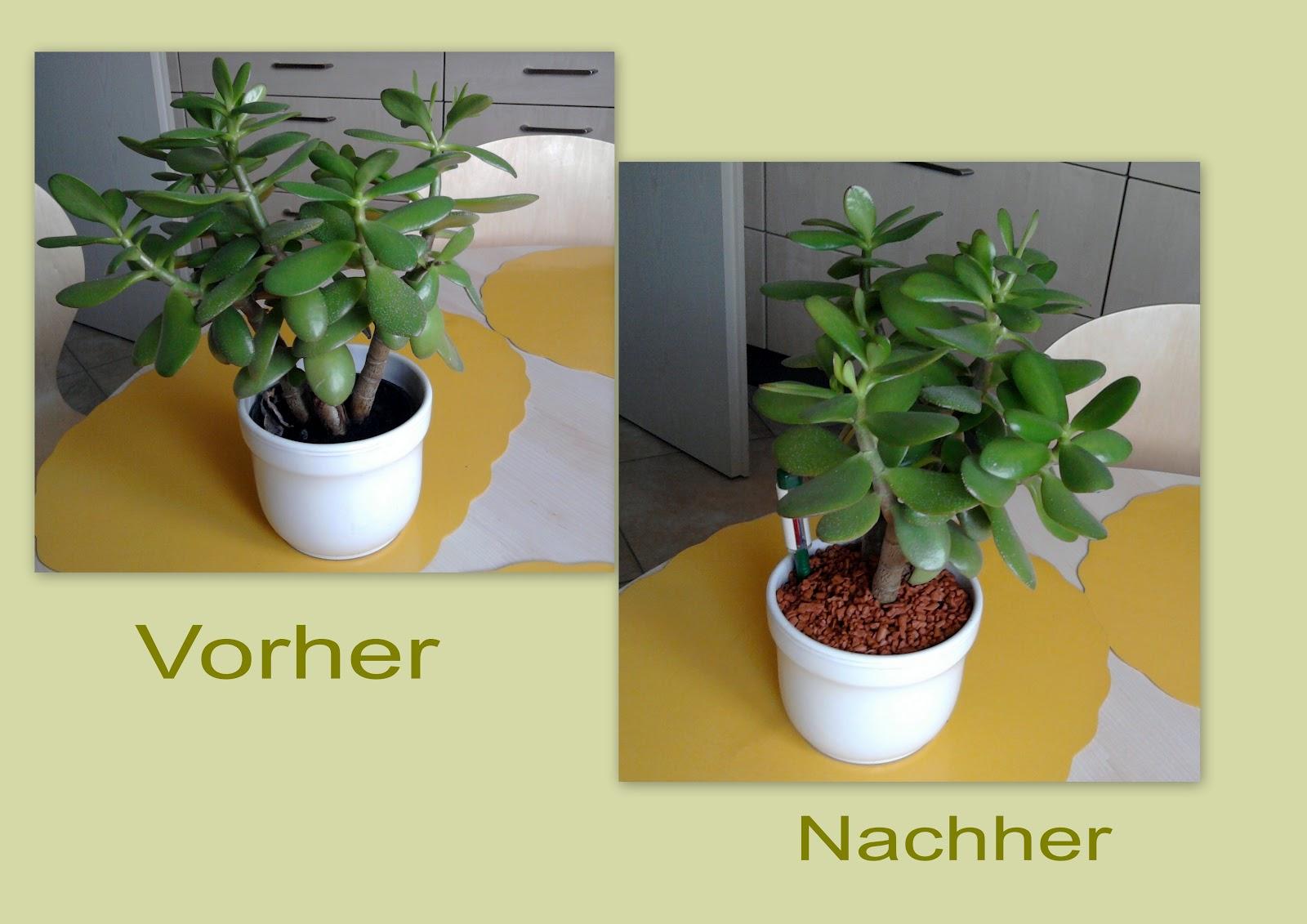 seramis tongranulat f r zimmerpflanzen seramis pflanz. Black Bedroom Furniture Sets. Home Design Ideas