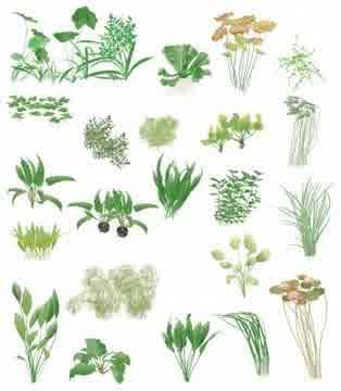 Pengertian dan Pengelompokan Klasifikasi 5 Kingdom (Plantae)