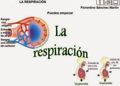 http://cplosangeles.juntaextremadura.net/web/edilim/tercer_ciclo/cmedio/las_funciones_vitales/la_funcion_de_nutricion/respiracion/la_respiracion/la_respiracion.html