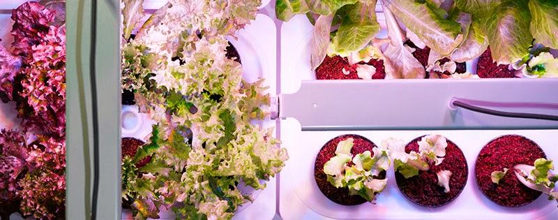 Orto Perpetuo, un sistema para cultivar tu huerto dentro de casa