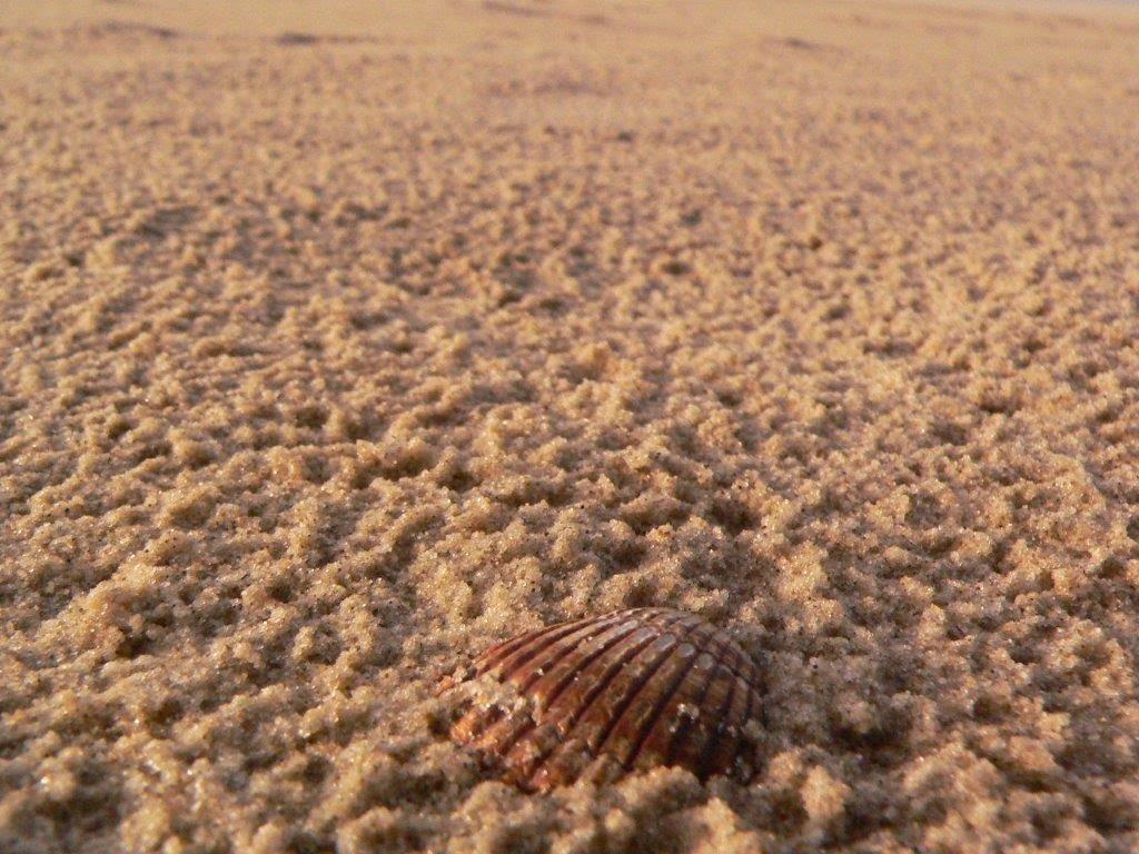 Wochenende Winter Urlaub Insel Meer Strand Sand Muschel